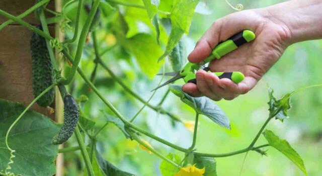 Potatura piante: tutto quel che occorre sapere per non commettere errori