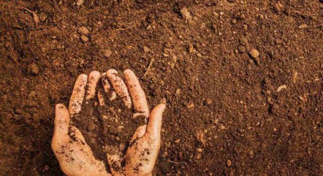 Come preparare il terreno per la semina: le regole da seguire