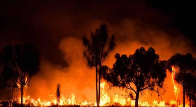 Gli incendi minacciano il suo casolare: 77enne muore per salvare gli animali