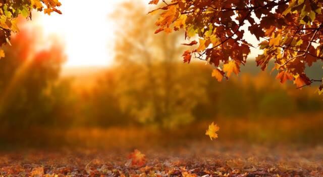 Cos'è e cosa significa foliage?