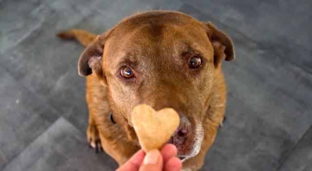 Cibi per cani fatti in casa: cosa cucinare per Fido