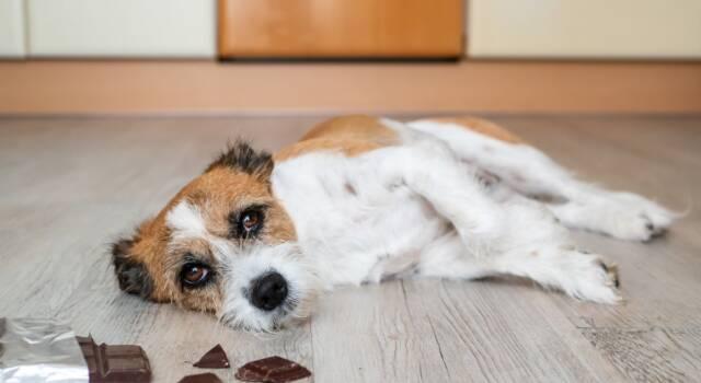 Gastroenterite cane, sintomi e cura: come aiutare il nostro amico a quattro zampe
