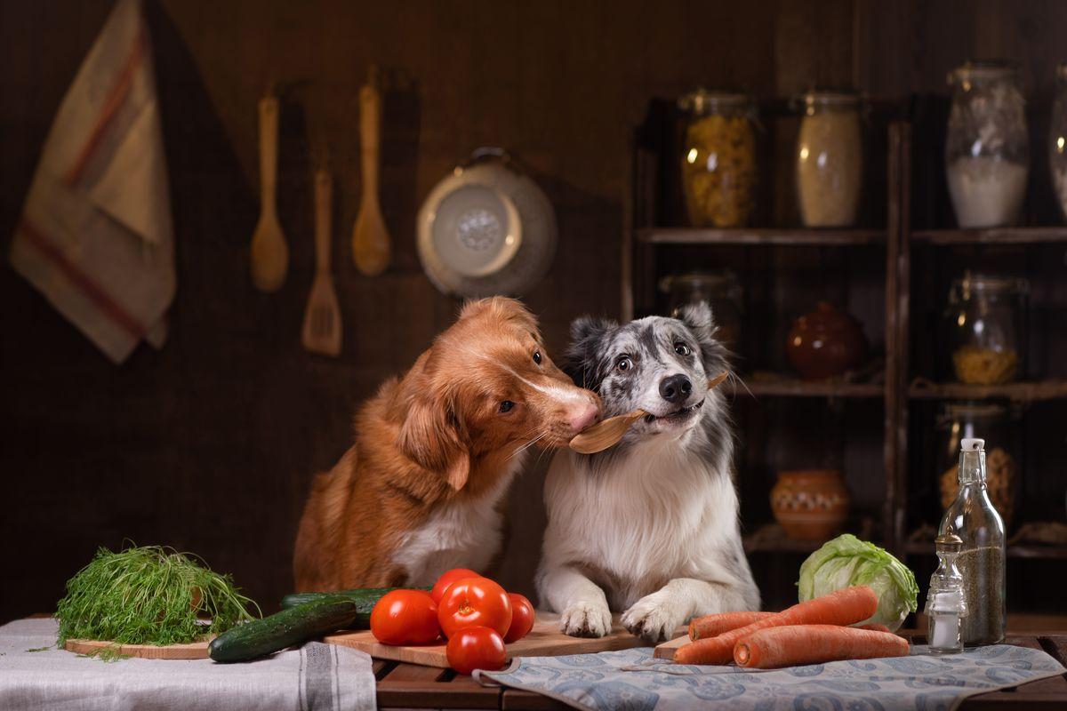 cani cibo verdura
