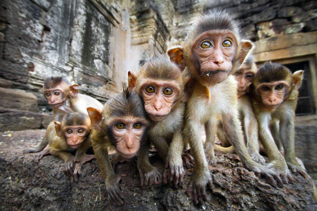 gruppo di scimmie