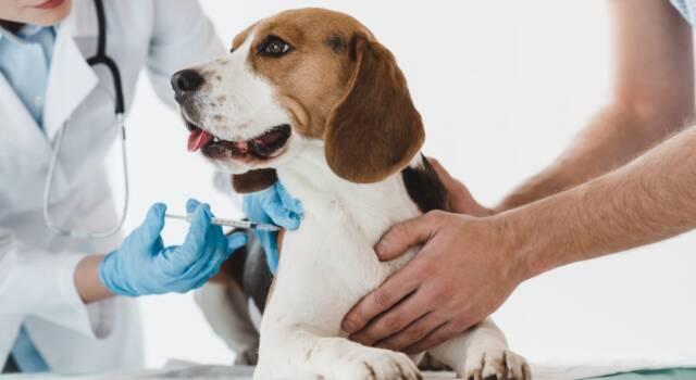 """Vaccini cane, """"core"""" e """"non-core"""": cosa dice la legge italiana?"""