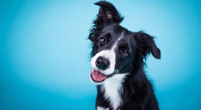 Qual è il costo del microchip del cane? Tutto quello che c'è sapere