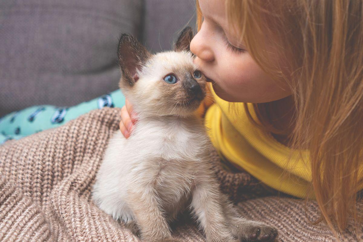 cucciolo di gatto siamese bambina