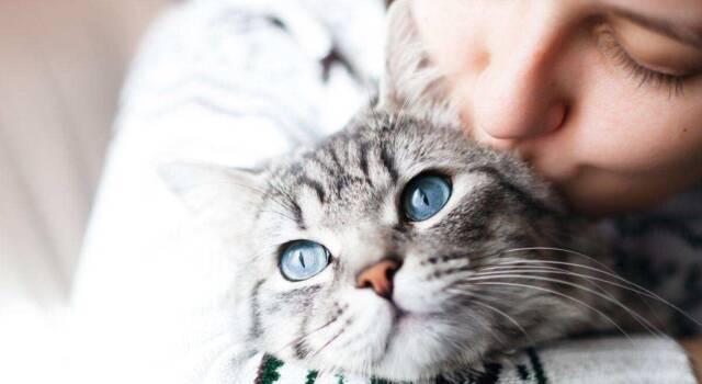 Il gatto Forbes ritorna a casa: era sparito da più di dieci anni
