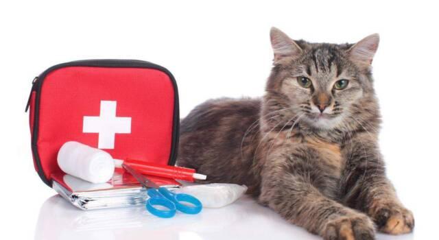 Aids felina: quali sono i sintomi e come si trasmette