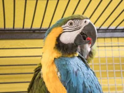Cosa mangiano i pappagalli? Tutto quel che c'è da sapere sulla loro alimentazione